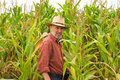 Free On The Field Of Maize Royalty Free Stock Photo - 26160905