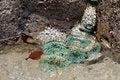 Free Green Sea Anemones Stock Photo - 26165070