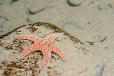 Starfish Underwater Stock Photography