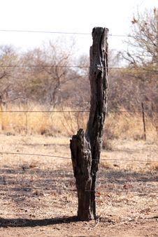 Bushveld Tree Trunk Fence Stock Photos