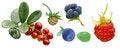 Free Various Fruit Set Royalty Free Stock Photography - 26175347