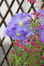 Free Delicate Summer Flowers Royalty Free Stock Image - 26177006