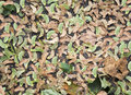 Free Autumn Leaves Wallpaper Backdrop Royalty Free Stock Images - 26178169