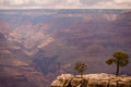 Free Grand Canyon Cliff With Two Trees In Foreground Royalty Free Stock Photo - 26178665