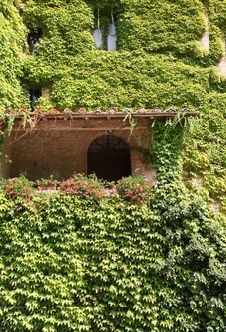 Free Ivy-covered House In Tuscany Royalty Free Stock Image - 26176926