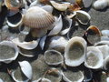 Free Shells On The Beach Stock Image - 26180791