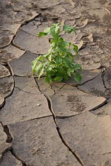 Free Life After A Drought Stock Photos - 26188213