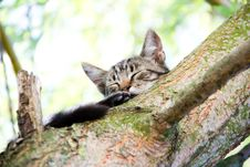 Free Cat On A Tree Royalty Free Stock Photography - 26189537