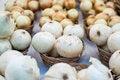 Free Onions Stock Photos - 26192353