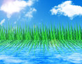 Free Grass Reflected In Water Royalty Free Stock Photography - 26198337