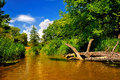 Free River In Forest On A Sunny Day Stock Photo - 26198490