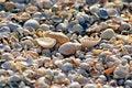Free Sea Shells. Coast. Beach Stock Image - 26198501