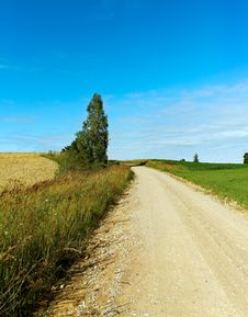 Tree At The Road. Royalty Free Stock Photography