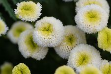 Free Photo Of Garden Flowers Stock Photography - 26192562