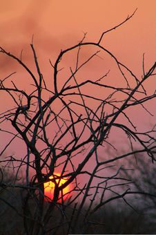 Free African Bush Sunset - Red Gold Warmth Royalty Free Stock Image - 26192716