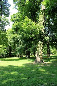 Free Sad Janka Kráľa. &x28;Oldest Bratislava Park&x29; Stock Image - 26196711