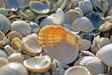 Free Sea Shells. Coast. Beach Stock Image - 26198481