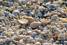 Free Sea Shells. Coast. Beach Stock Image - 26198501