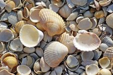 Free Sea Shells. Coast. Beach Stock Photos - 26198513
