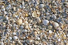 Free Sea Shells. Coast. Beach Royalty Free Stock Images - 26198519