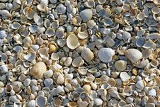 Free Sea Shells. Coast. Beach Stock Image - 26198531