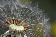 Free Dandelion. Stock Image - 2622881