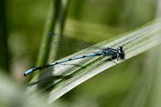 Free Dragon-fly. Stock Photography - 2623262