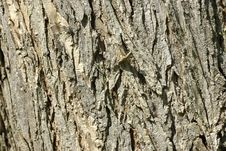 Oak Bark Royalty Free Stock Photos