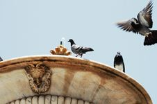 Free Doves And Fountain Stock Image - 2624031