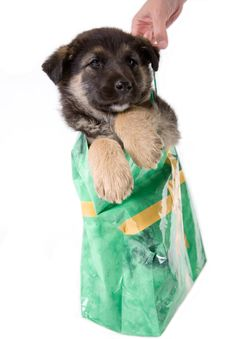Free Puppy Dog Looking Out Of A Bag Royalty Free Stock Photos - 2624168