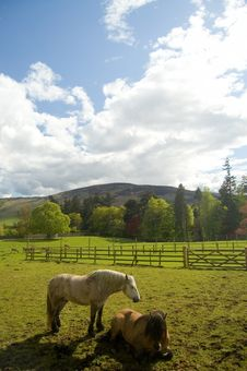 Free Horses On Scottish Landscape Stock Photography - 2625162