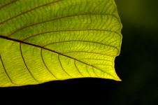 Free Green Leaf Stock Photography - 2627602