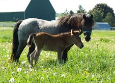 Free Horse And Foal Royalty Free Stock Photo - 2628125