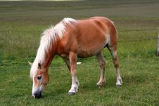 Free Horse Eating Grass Royalty Free Stock Photos - 2628198