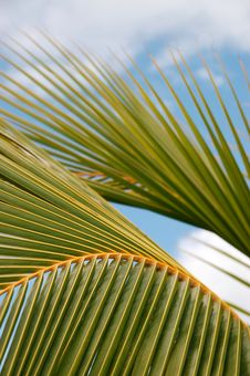 Free Palm Leaf Royalty Free Stock Images - 2628199