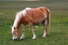 Free Horse Eating Grass Royalty Free Stock Photo - 2628215