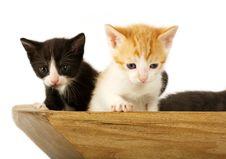 Free Curious Kitties Stock Photography - 2628482