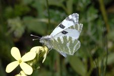 Free Butterfly Resting On A Flower Stock Photos - 2629233