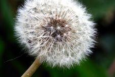 Free Dandelion Stock Image - 2629461