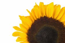 Free Close-up Of Sunflower Stock Photography - 2629752
