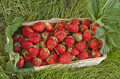 Free Basket Of Fresh Strawberries Royalty Free Stock Photography - 26204497