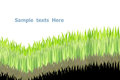Free Green Grasses Stock Photo - 26205540