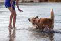 Free Dog Shakes Off The Water In Front Of A Girl Royalty Free Stock Photo - 26206725