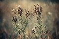 Free Meadow Plants Stock Photo - 26209050