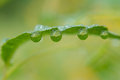 Free Leaf Dews Stock Images - 26209314