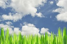 Free Grasses And Sky Stock Photos - 26207883