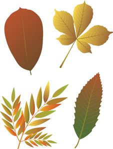 Free Autumn Leaves. Stock Image - 26208201