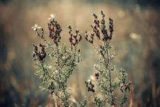 Free Meadow Plants Stock Photo - 26209050