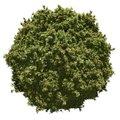 Free Miniature Leafy Planet Stock Photo - 26218570