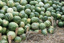 Free Many Watermelons Royalty Free Stock Photos - 26211718